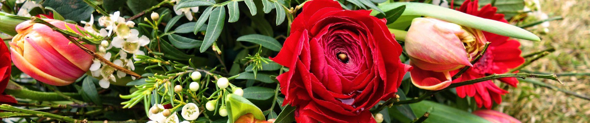 flower-3212787